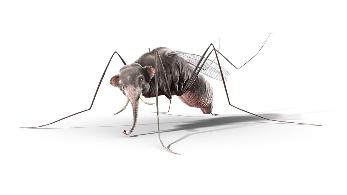 wirtschaftswoche_mosquitofant_web_40x22,5