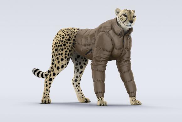 Charal | Cheetah