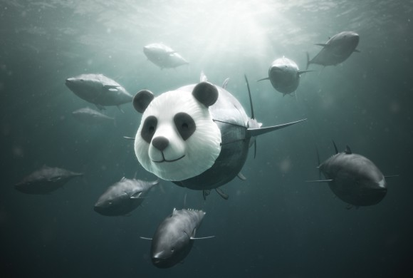 WFF | Blufin Tuna