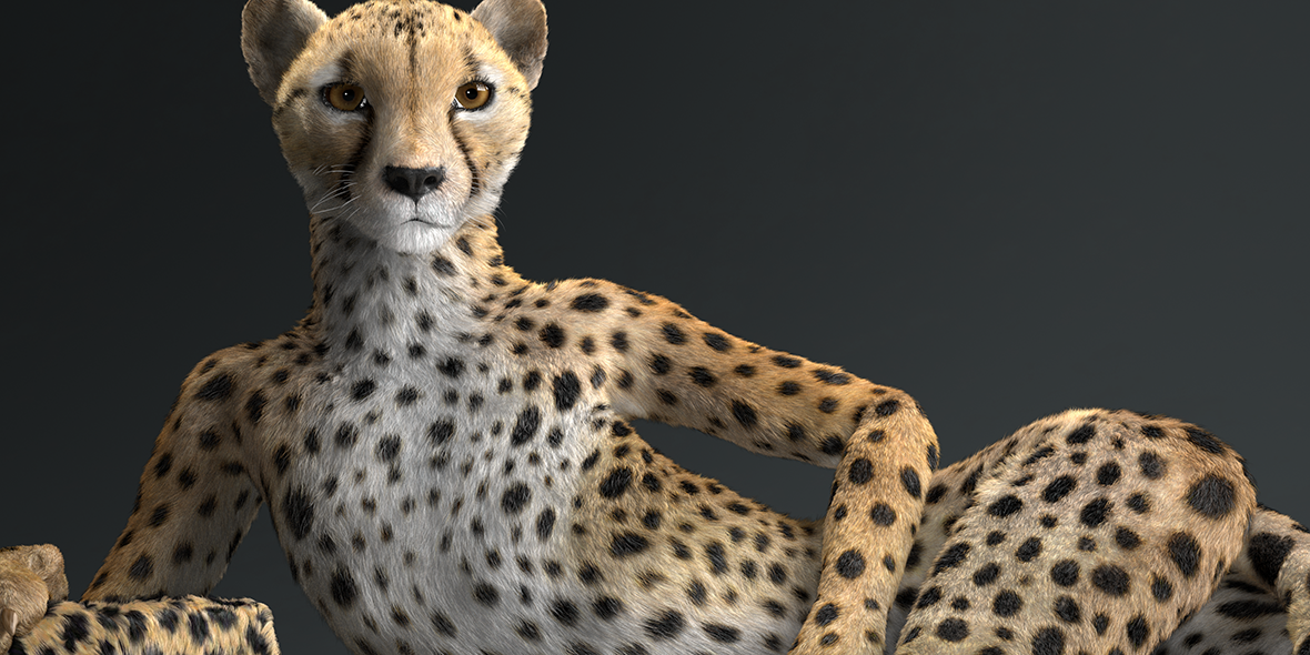 cheetah_0003_c_news
