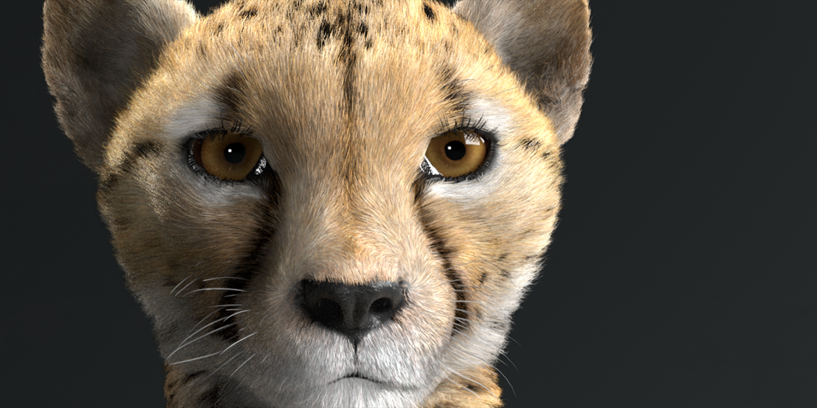 cheetah_0003_c_news_narrow